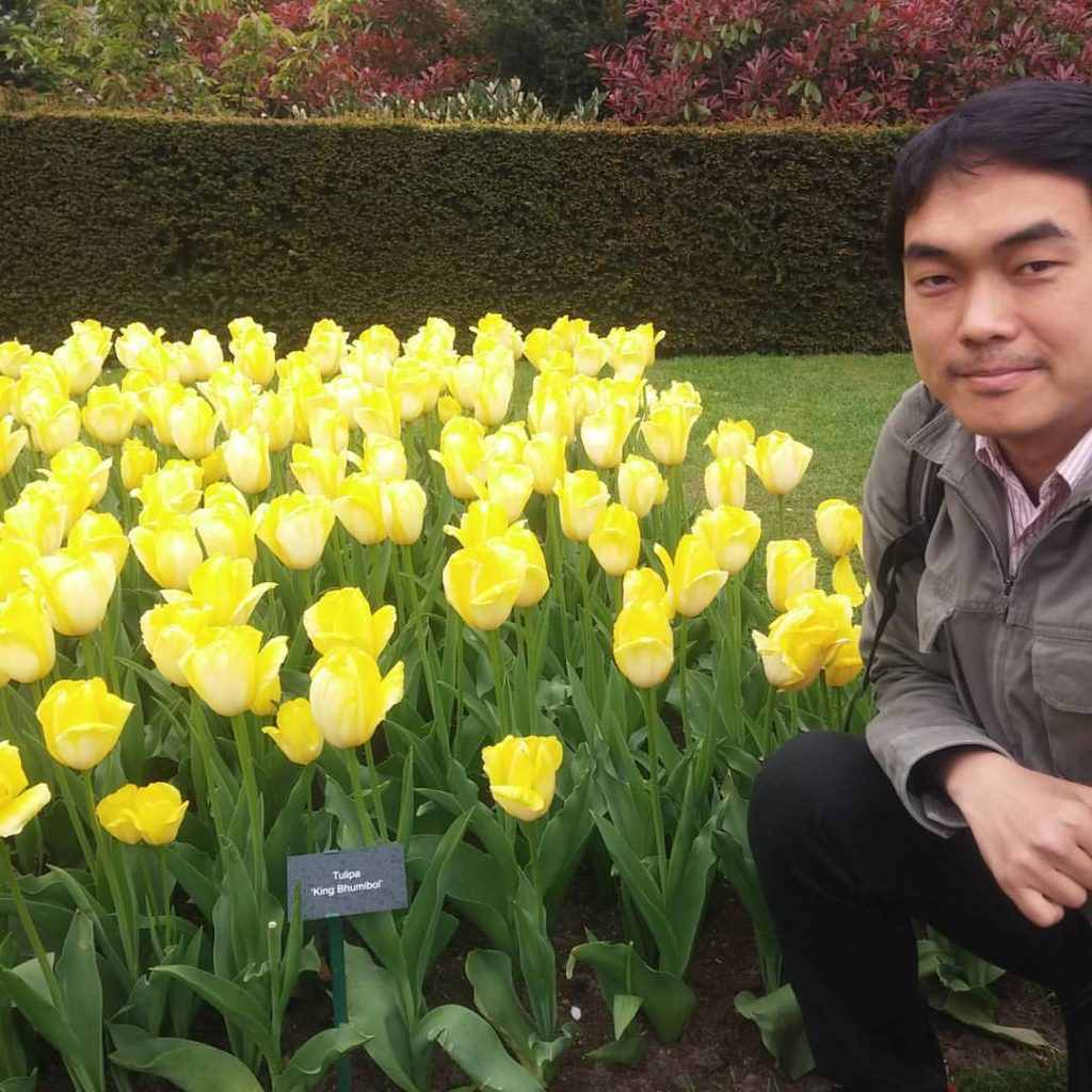 Tulip ดอกทิวลิป Keuhenhof Beaconboy Travel